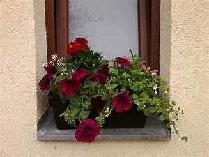 Gräser Für Balkonkasten : die balkonsaison ist er ffnet ~ Michelbontemps.com Haus und Dekorationen