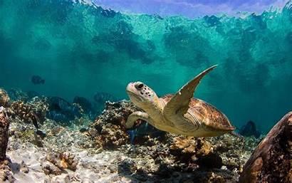 Sea Turtles Turtle Wallpapers Wallpapertag