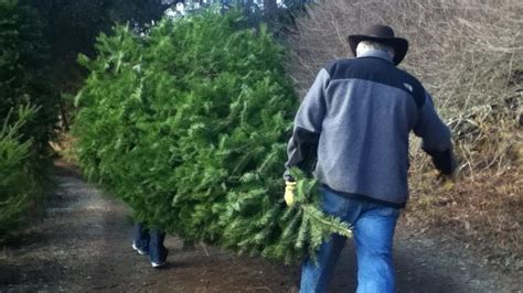 national christmas tree association explains this year s