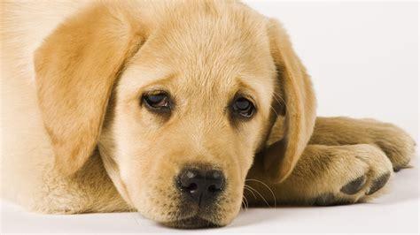 sprache der tiere die koerpersprache der hunde tierwelt
