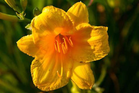 macro photography  flowers dummies