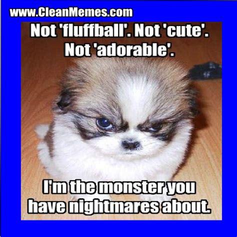Clean Animal Memes - cute animal memes clean