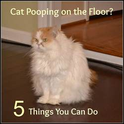 cat pees outside litter box but poops in it cat pooping outside the litter box 5 possible reasons why