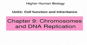 Chapter 9  Chromosomes And Dna Replication