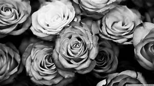 Download Roses Black And White Wallpaper 1920x1080 ...