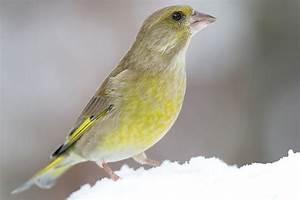 Kleine Vögel Im Garten : g rtnern f r die v gel nabu ~ Lizthompson.info Haus und Dekorationen