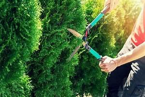 Bäume Schneiden Wann Erlaubt : tipps f r gartenbesitzer hecke schneiden was ist wann ~ A.2002-acura-tl-radio.info Haus und Dekorationen
