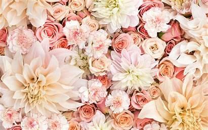 Rose Floral Patterns Cat Prints Backgrounds Itl
