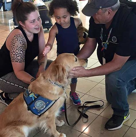 lcc comfort dogs k9 comfort dogs help ease following orlando tragedy