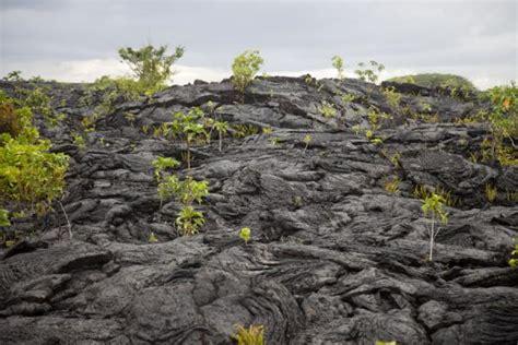 field  lava  saleaula savaii lava fields savai