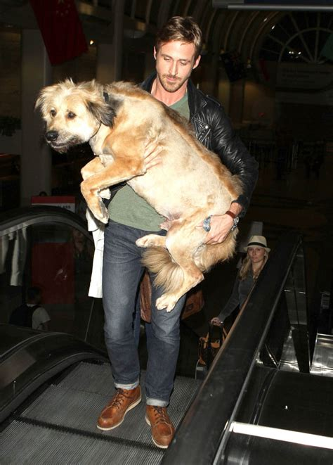 ryan gosling rescues  dog    dinner  eva