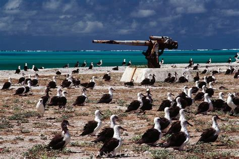 Who Lives On Midway Island