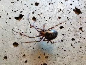 Connecticut Spiders Identification