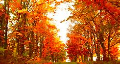 Fall Autumn Gif  Find & Share On Giphy