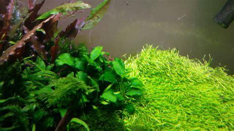 how to get rid of green spot algae in an aquarium aquascaper