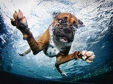 Underwater Dogs in Swimming Pools Slapped Ham