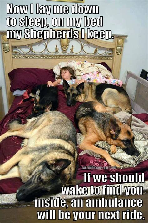 Ambulance In German Meme - 120 best images about german shepherd memes on pinterest german shepherd breeds police