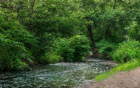 forest creek background high quality  backgrounds