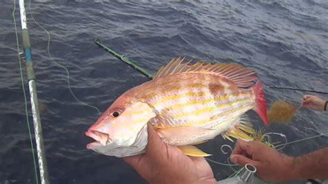 snapper lane caught island padre south coast nk