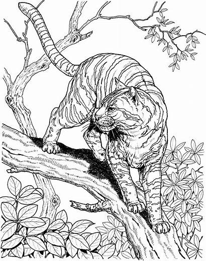 Coloring Pages Wildlife