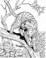 Tiger Coloring Pages Animals Wildlife Tree Printable Jungle Super Google sketch template