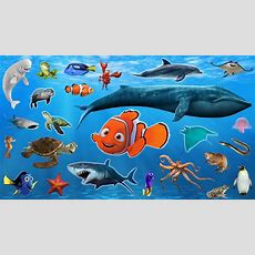 Learn Sea Animals + Water Animals Names And Sounds  Drulii Tv For Kids  Place 4 Kids