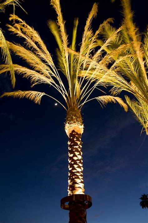 stella led palm tree light bradley lighting