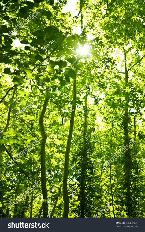 Green Forest Trees Background Natural Floral Stock Photo