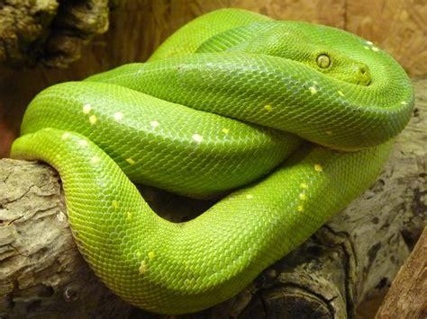 Do Snakes Have Bones?   HubPages