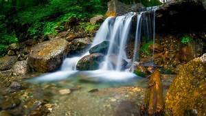 waterfall, between, trees, , rocks, during, daytime, hd
