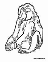 Baboon Coloring Baboons sketch template