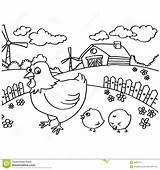 Chicken Chook Template Coloring Outline sketch template