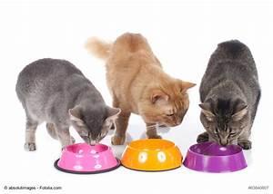 Kochen Für Katzen : welche f tterungsart passt zu mir und meiner katze ~ Lizthompson.info Haus und Dekorationen