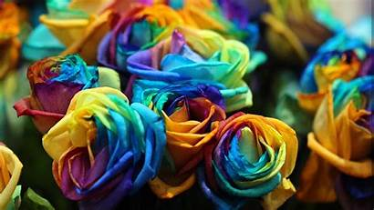 Multicolor Roses Flowers