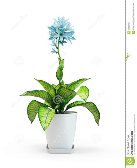 fleur de plante d int 233 rieur d 233 toile bleue dans le pot illustration stock image 69653194