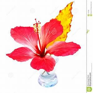 Vase Für Eine Blume : exotische blume im vase stockfoto bild von auslegung 1727282 ~ Sanjose-hotels-ca.com Haus und Dekorationen