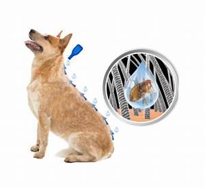 Autositz Für Hunde Bis 15 Kg : duoprotect f r hunde bis 15 kg von beaphar g nstig kaufen bei zoobio ~ Frokenaadalensverden.com Haus und Dekorationen