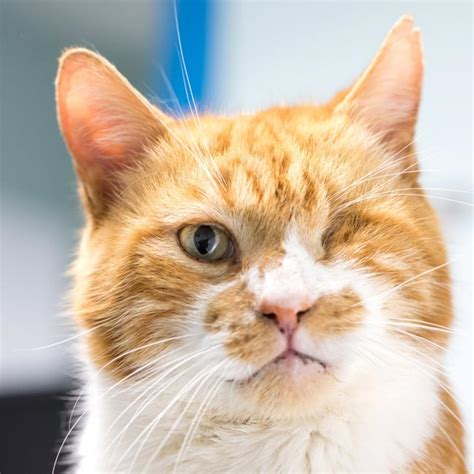 neuter cats  prevent fiv infection  pdsa vet times