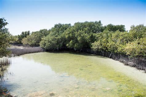 purple island al khor qatar magesh photography