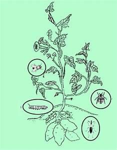 Crop Ecosystem