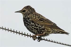 Kleine Vögel Im Garten : wo sind die v gel hin nabu baden w rttemberg ~ Lizthompson.info Haus und Dekorationen