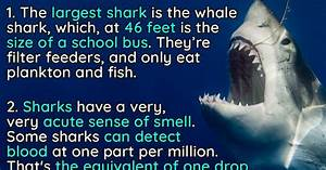 10 Jaw Dropping Facts About Sharks 22 Words
