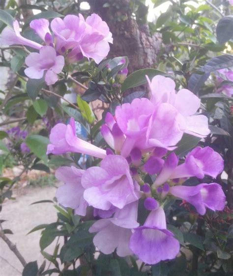 bunga ungu muda