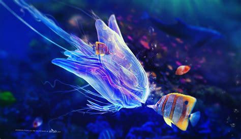blue jellyfish underwater wallpapers hd desktop