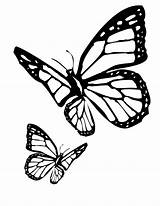 Butterfly Coloring Butterflies Pages Colouring Printable Monarch Flitting sketch template