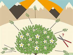 Comment Reconnaitre Un Hibiscus D Intérieur Ou D Extérieur : comment tailler un hibiscus 10 tapes ~ Dallasstarsshop.com Idées de Décoration
