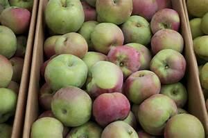Compote Poire Pomme : compote de pomme et poire vegan gold thyme ~ Nature-et-papiers.com Idées de Décoration