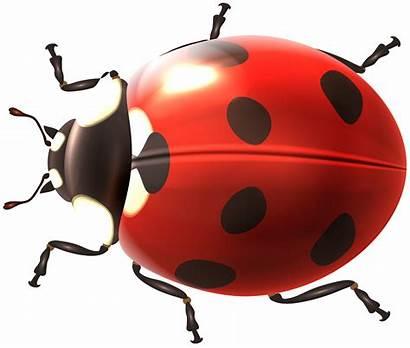Ladybug Transparent Bug Clip Clipart Lady Leaf