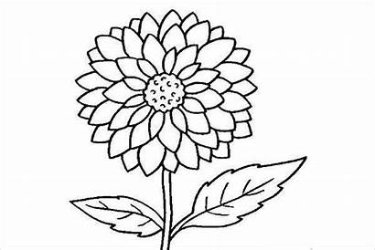 Coloring Cool Flower Pages Template Templates Colouring