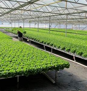 Hydroponics As The Future Of Gardening And Farming: An ...